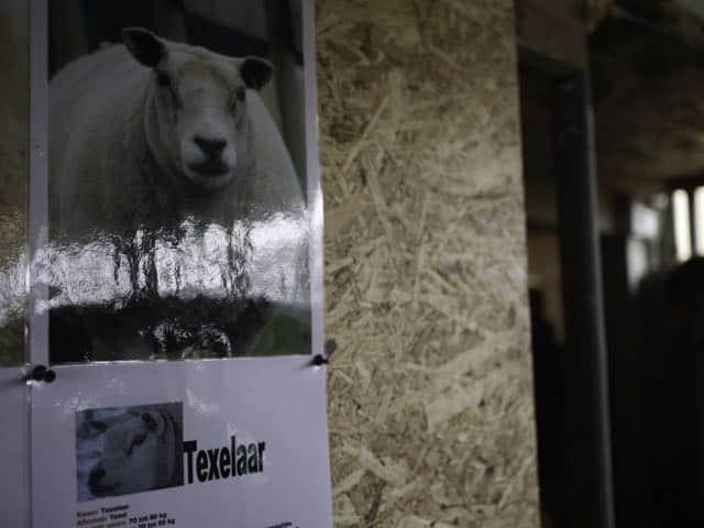 Op kraambezoek bij schapenboerderij texel wandernan for Schapenboerderij te koop