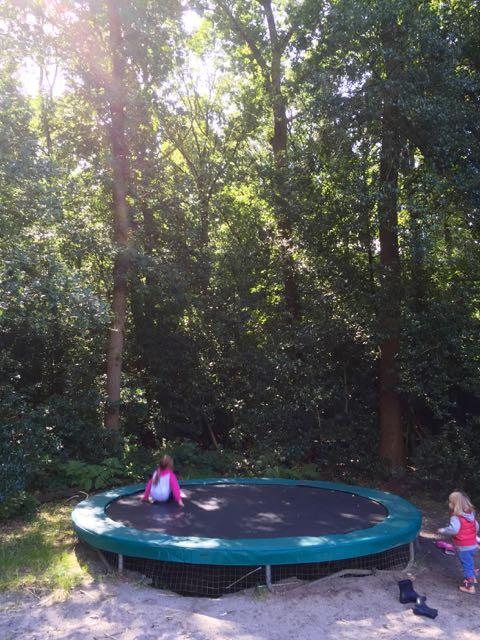 Kijk eens op wat voor mooie plek deze staat, midden tussen de metershoge bomen!