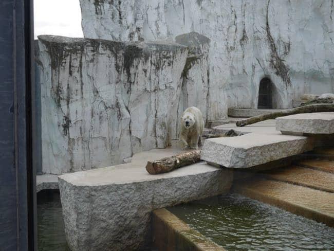 karlsruhe zoo - 4