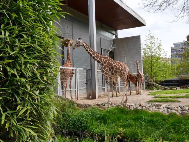 karlsruhe zoo - 5