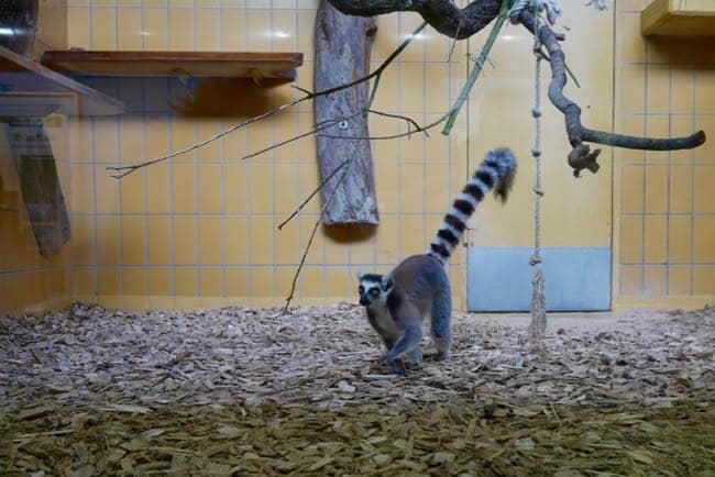 karlsruhe zoo - 7