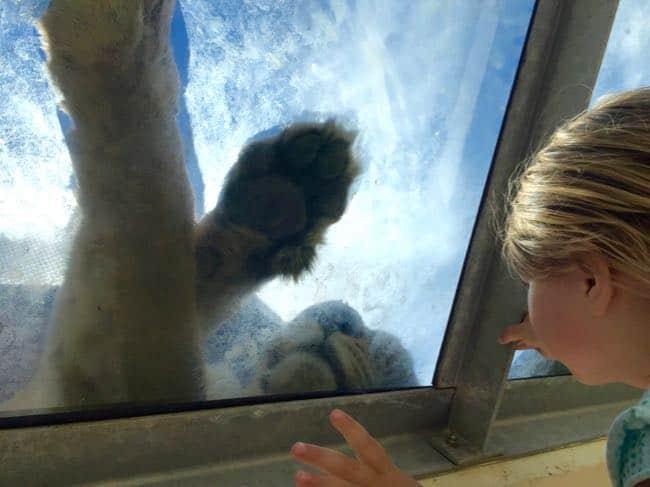 dierentuin-in-porto