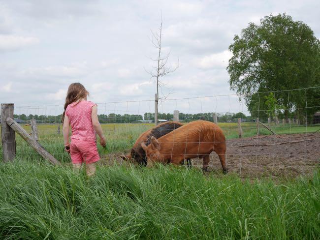 Zelfs Noor durft nu varkens te voeren...