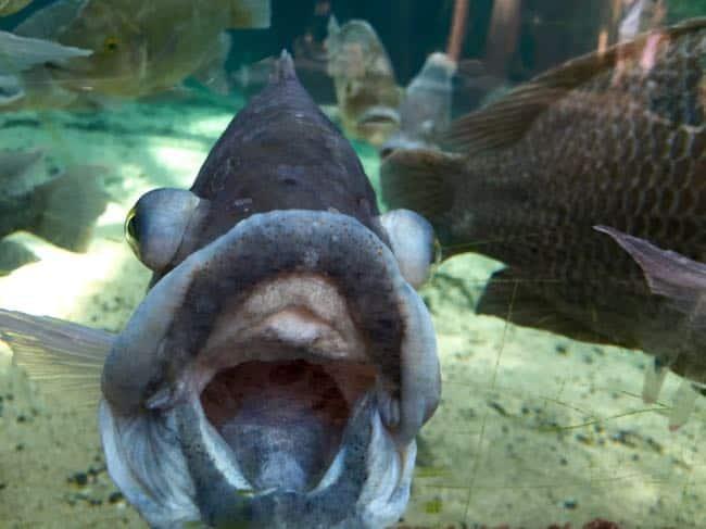 Well hello, mr fish! (met de iPhone overigens, vind ik nog wel knap van 'm)