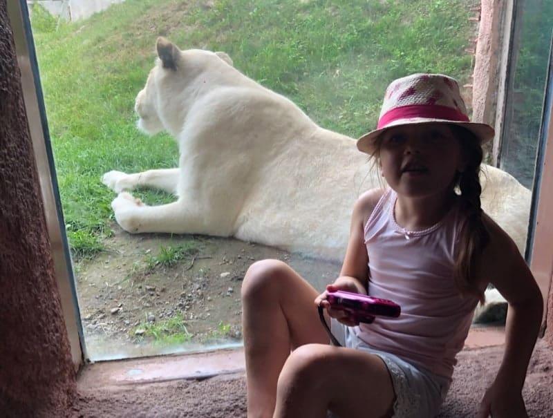 dierentuin in toronto