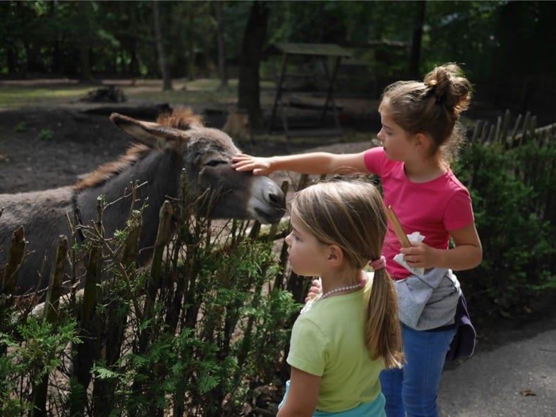 zoo veldhoven